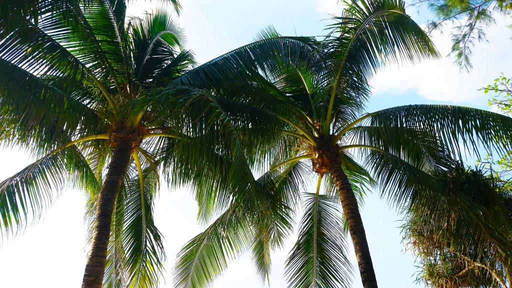 Phuket beach relax