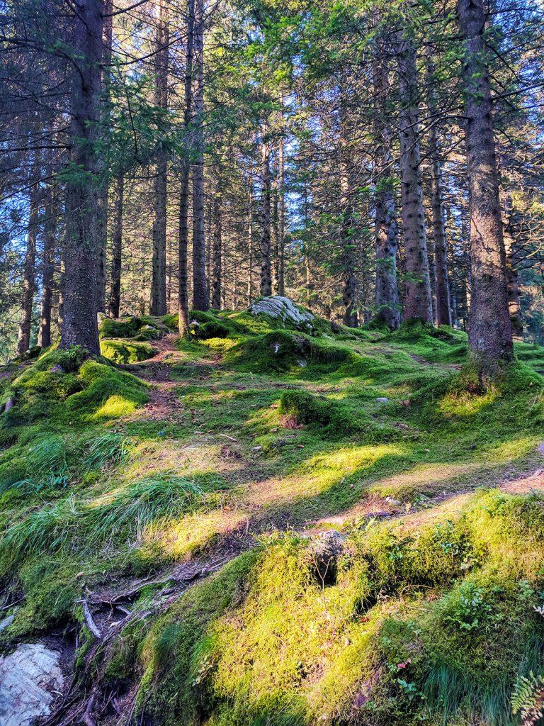 Mount Floyen hiking bergen