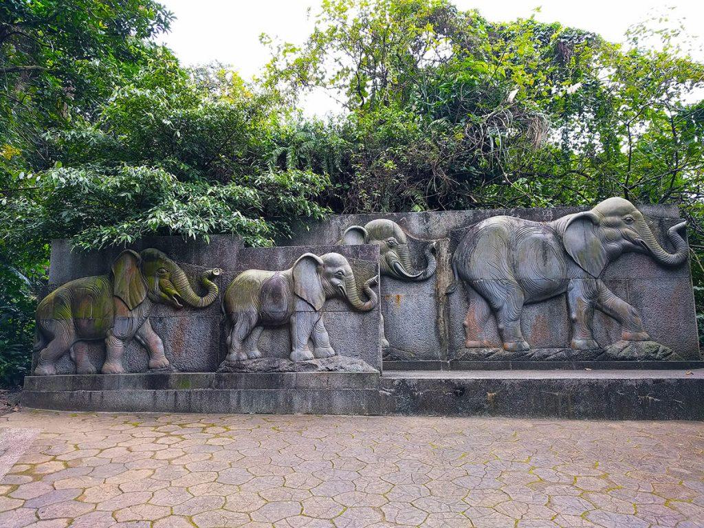 hike elephant mountain