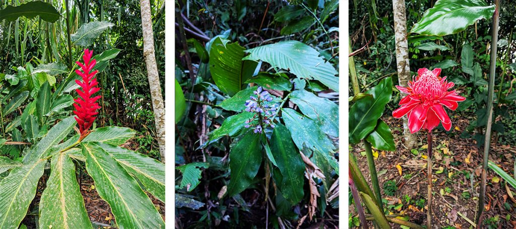 peru Amazon rainforest flowers