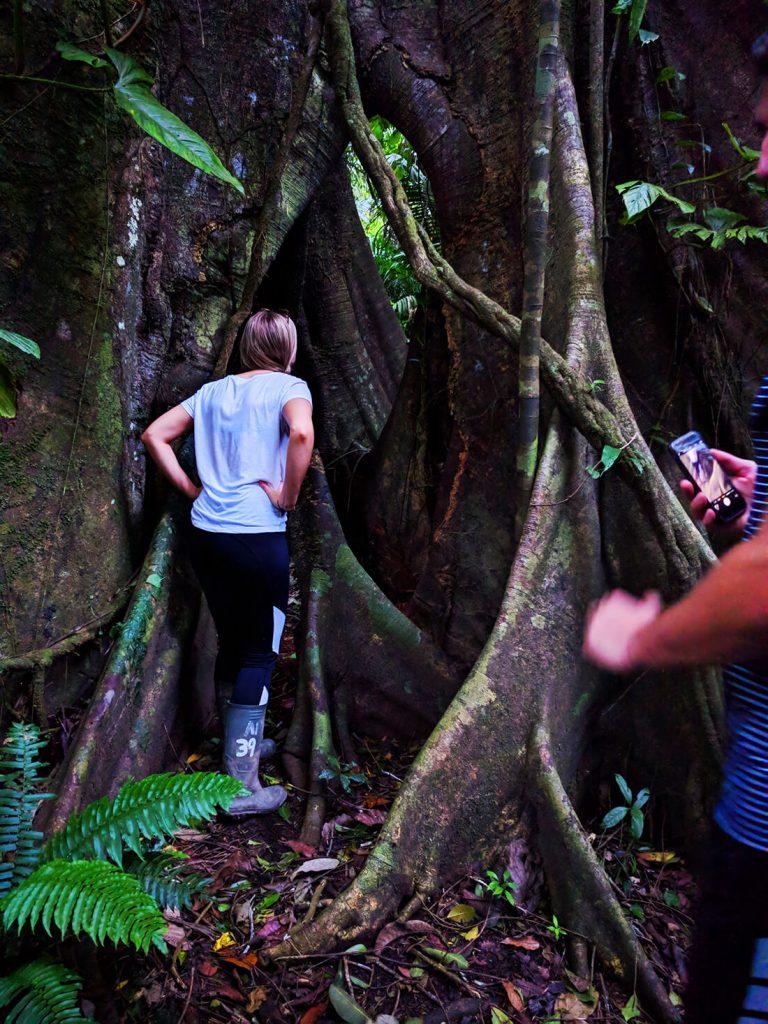 peru rainforest bats