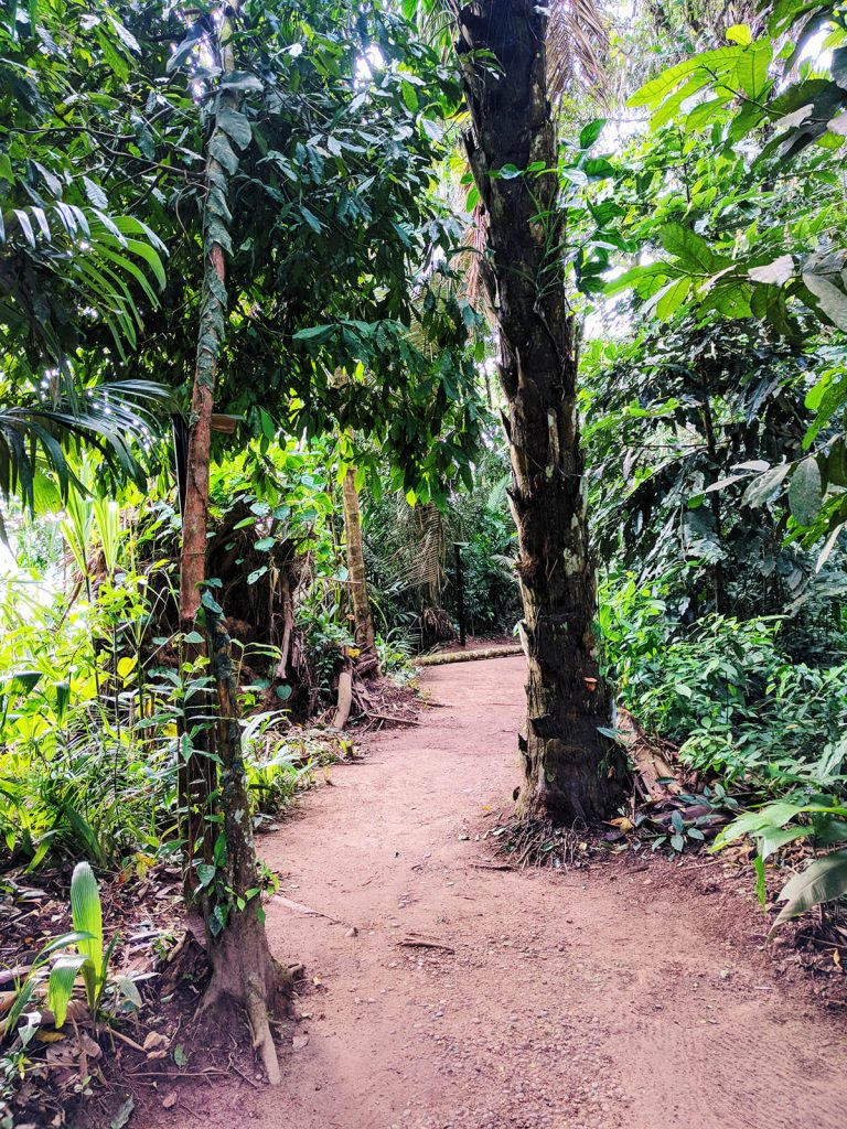 peru jungle trekking