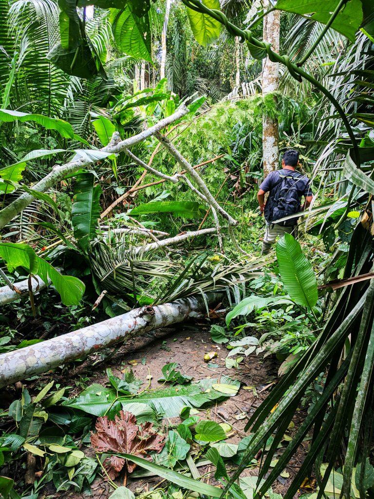 peru jungle storm