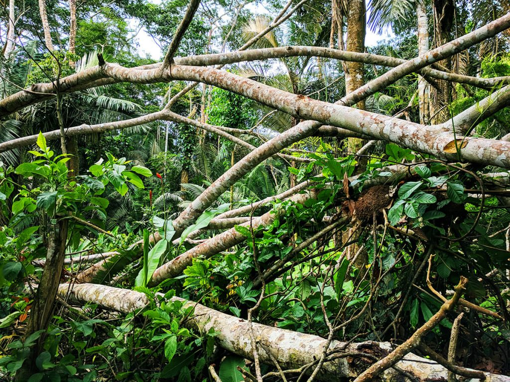 Amazon rainforest storm trees