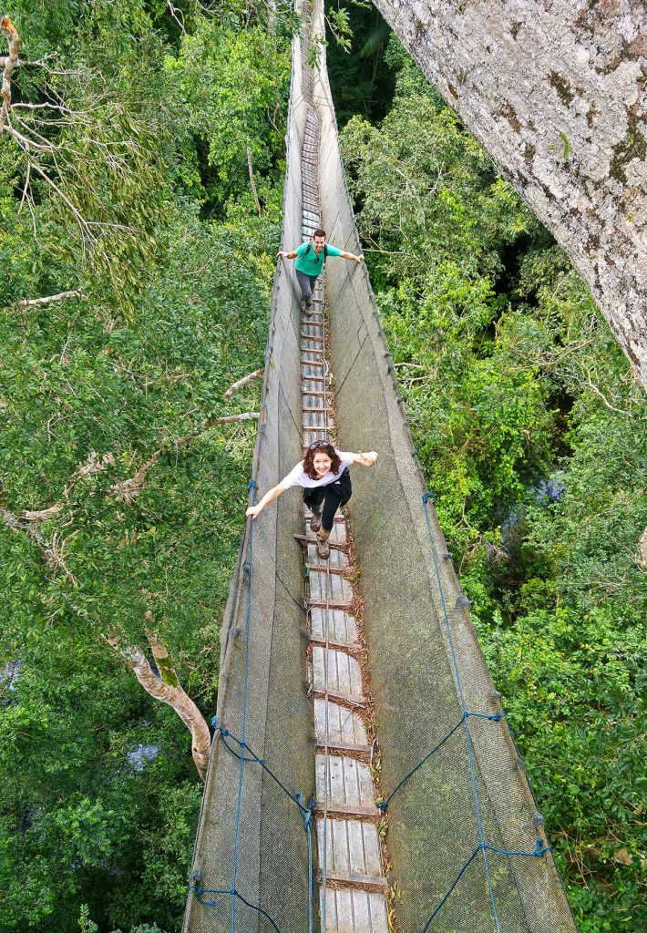 amazon planet canopy walk