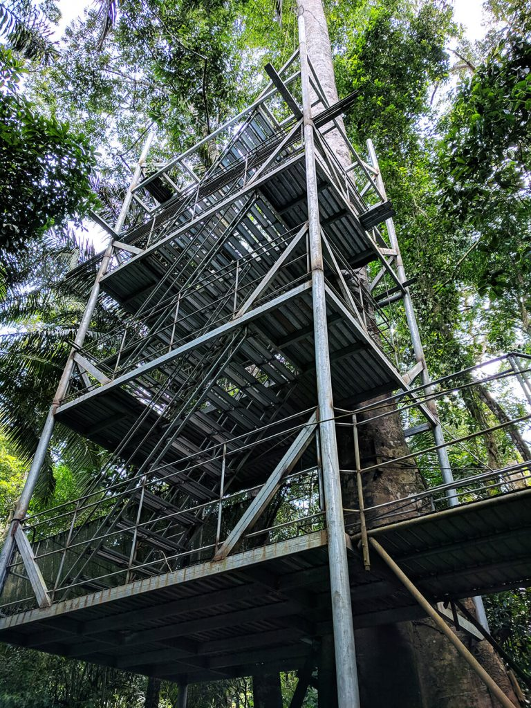 amazon planet canopy stairs