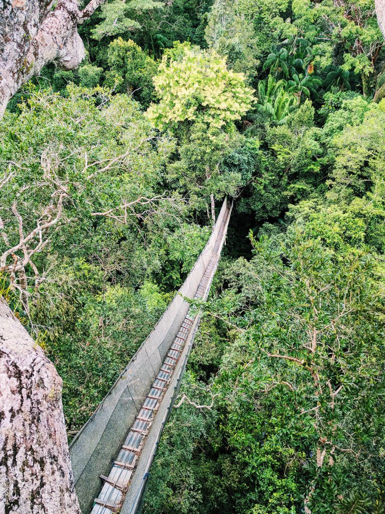 amazon planet canopy walk bridge