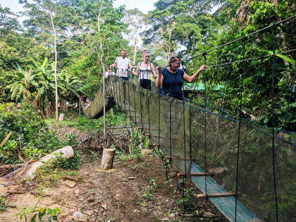 amazon rainforest peru bridge