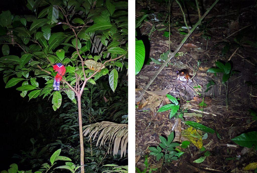 Amazon rainforest night creatures