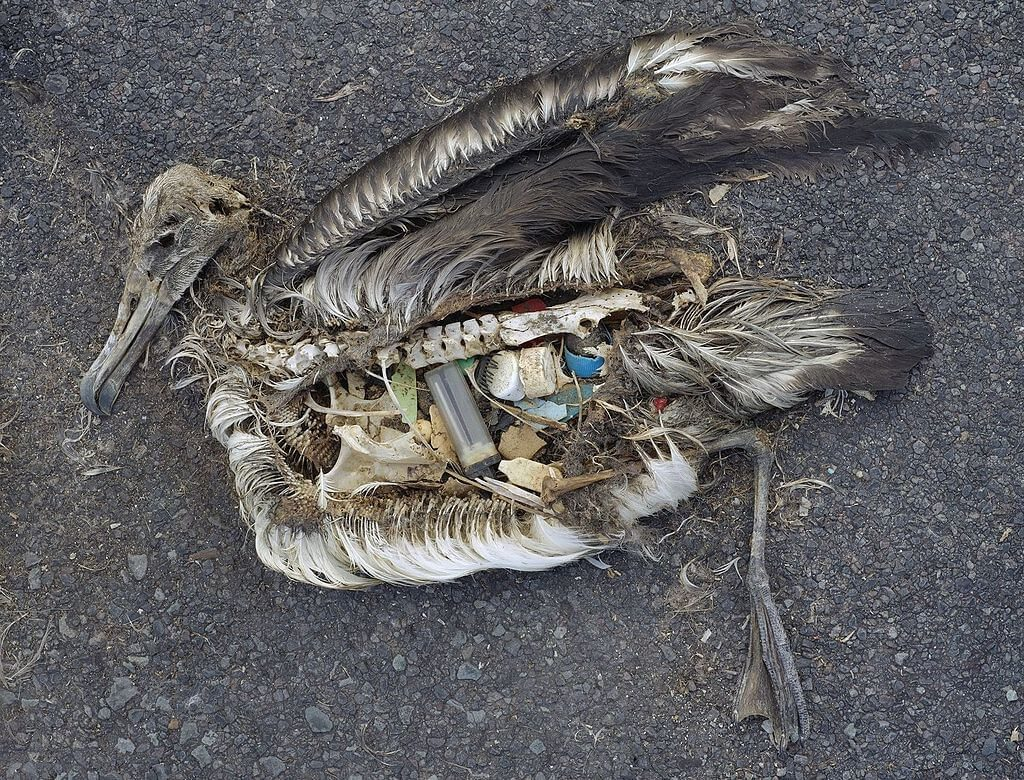 marine birds plastic