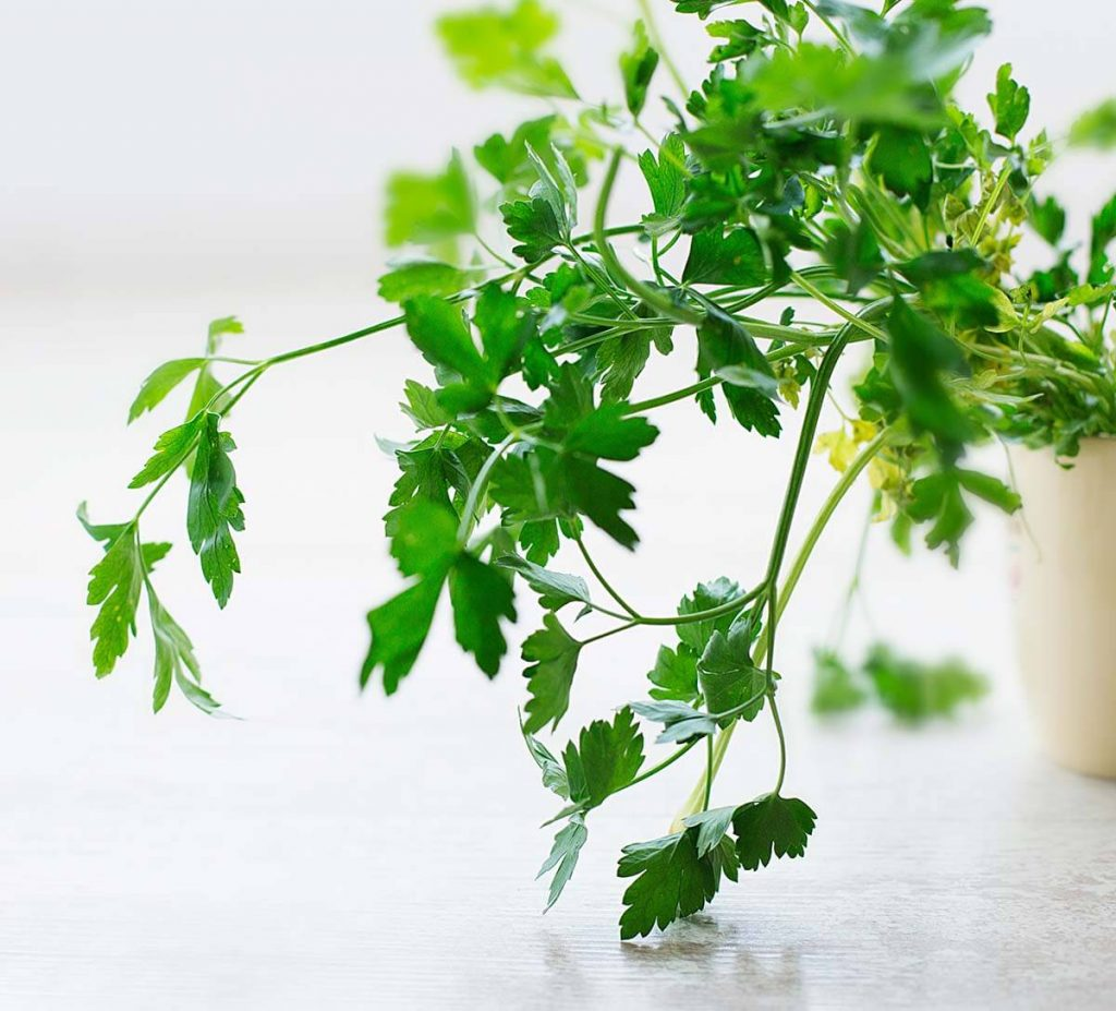 how to reduce food waste with herb garden